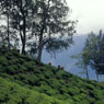 Paul Nevin Kerala Photo Tea plantations Munar