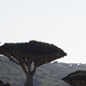 Paul Nevin Socotra Island travel Dragon's blood trees